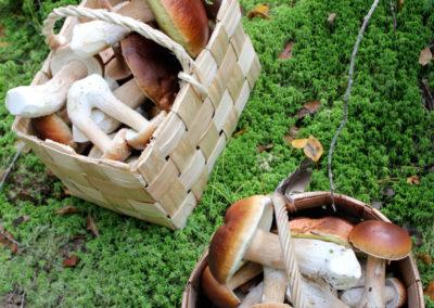 Sieniherkut / delicious mushrooms